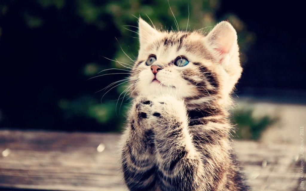 10 redenen waarom mensen met katten gelukkiger door het leven gaan!