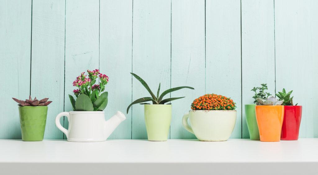 11 huisplanten die je huis zuiveren