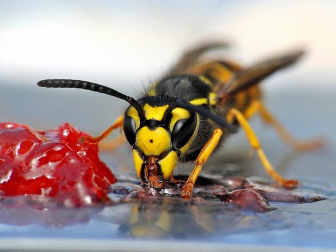 4 handige tips om je te wapenen tegen een wespenplaag