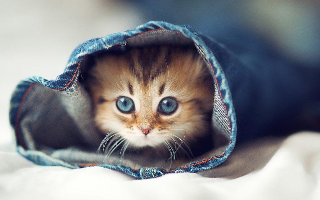 5 signalen dat je je kat te veel verwent!