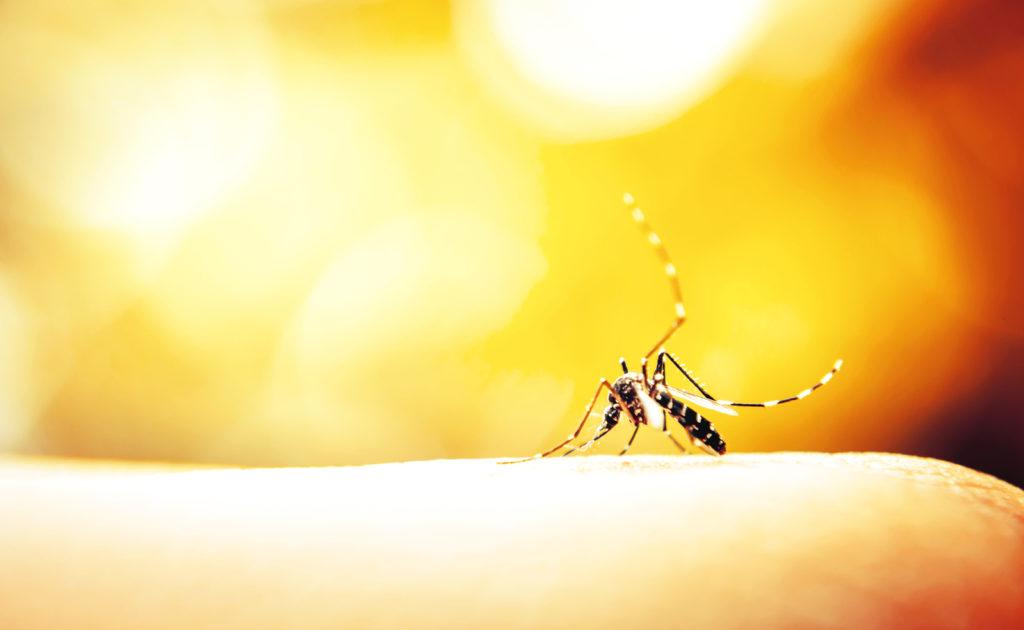 7 handige tips om muggen te bestrijden
