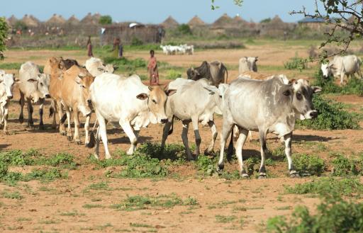 Watertekorten brengen wereldwijd drie miljard mensen in problemen