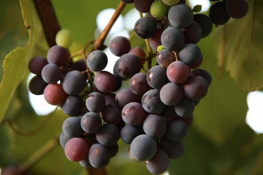 Nieuw-Zeelandse wijnen laten nieuw record optekenen