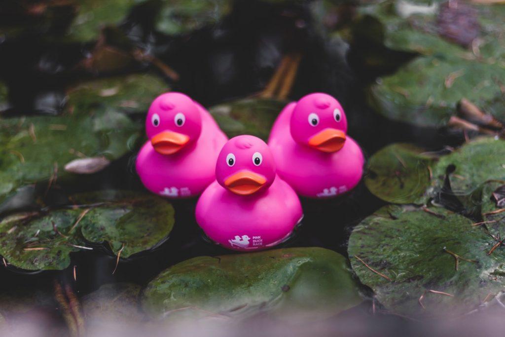 Think Pink laat 20.000 badeendjes racen om aandacht te vragen voor borstkankeronderzoek