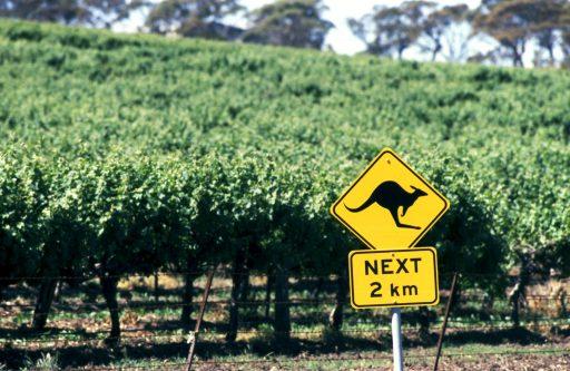 Australische wijnindustrie overleeft horrorjaar: 'De algemene vraag en wijnconsumptie bleef positief'