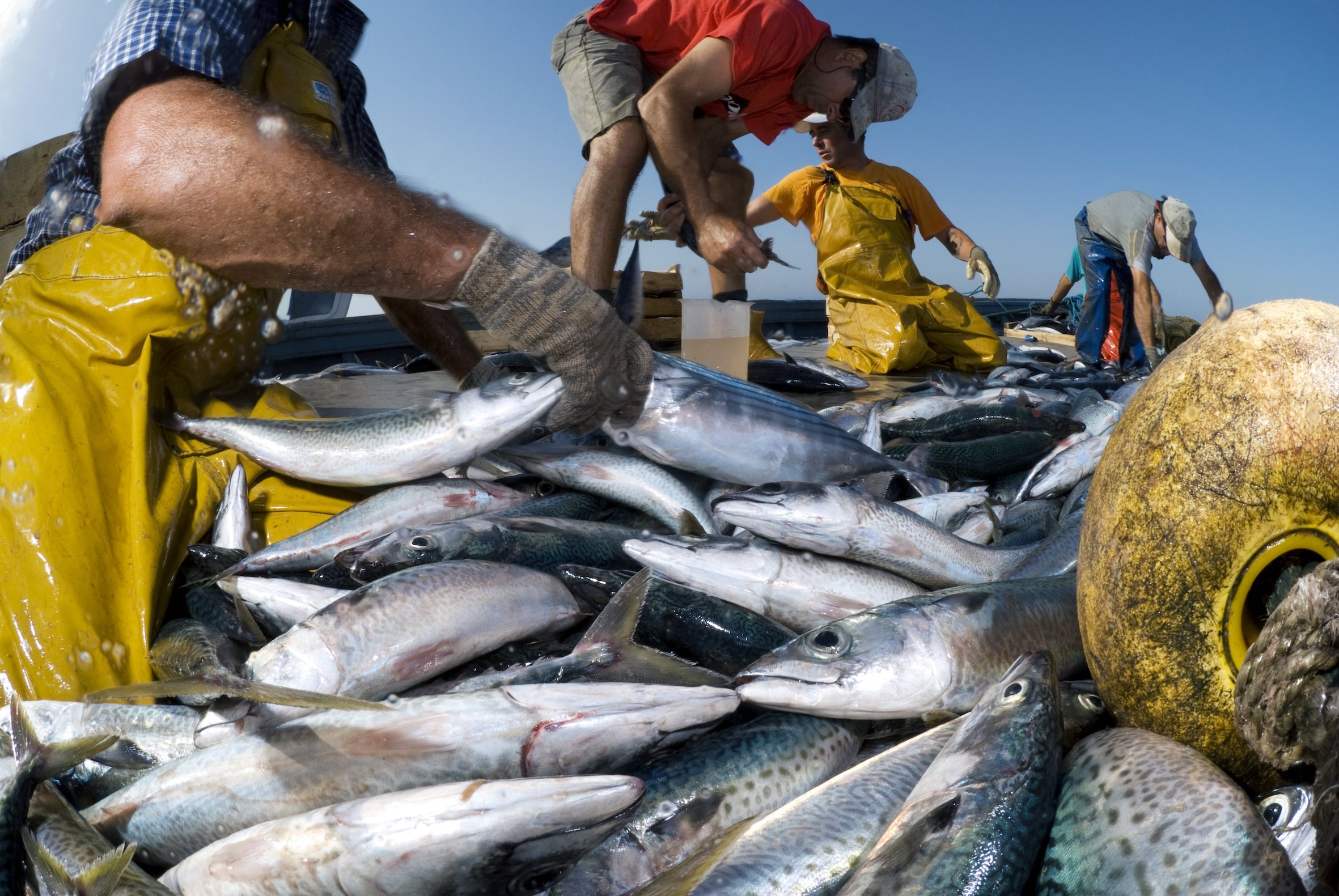 De oorlog om makreel: Hoe klimaatverandering een internationaal conflict op gang bracht - Business AM - NL