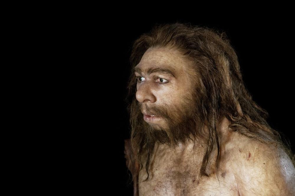 Neanderthalers bezaten capaciteit om te horen en spreken als mensen - Business AM - NL