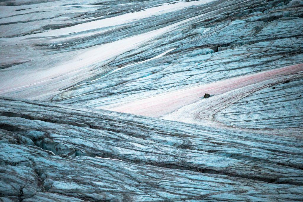 Roze gletsjerijs algen