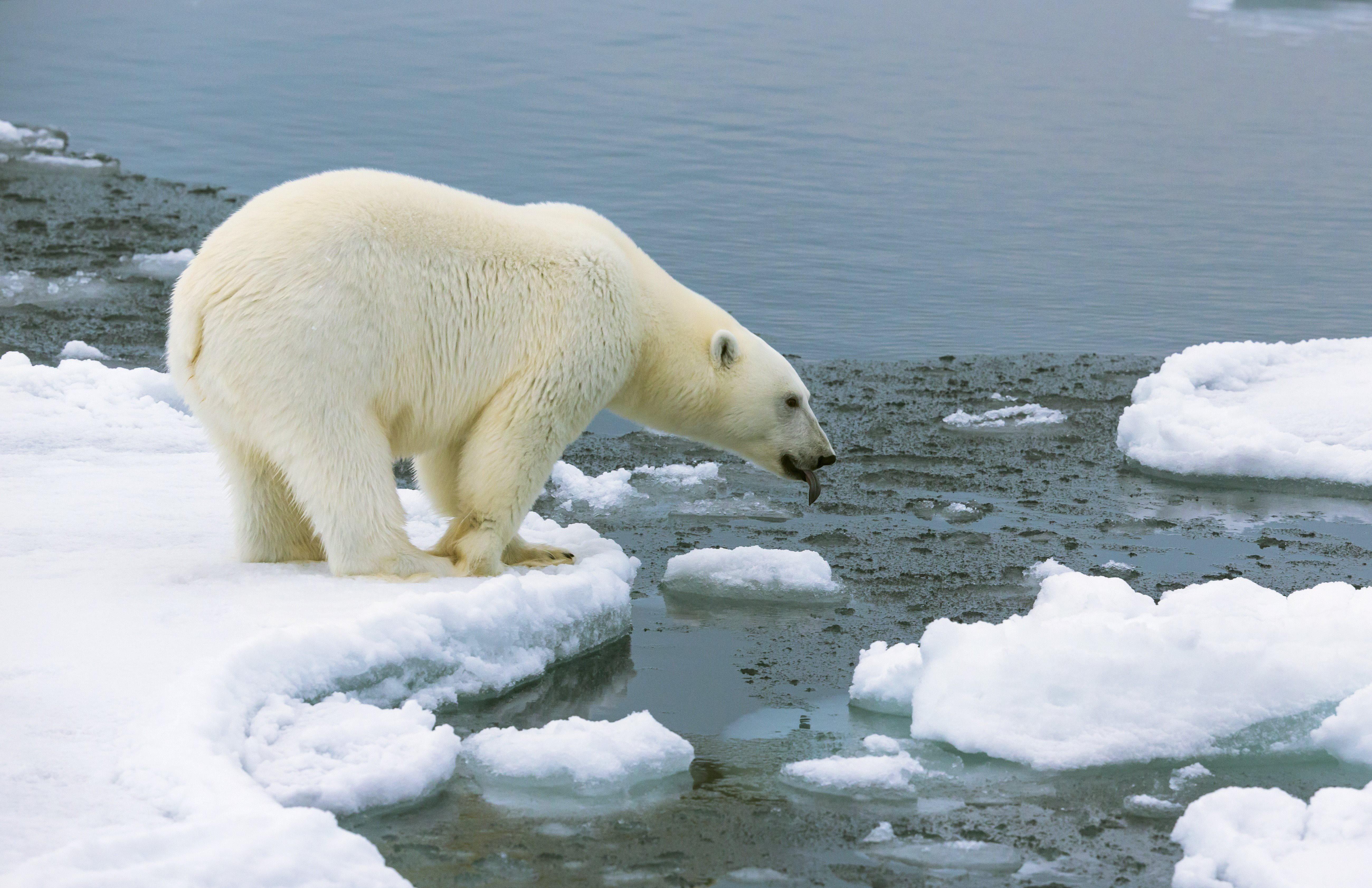 Hoe nieuw onderzoek aantoont dat smelten van het ijs wellicht het grootste drama ooit is voor mensheid - Business AM - NL