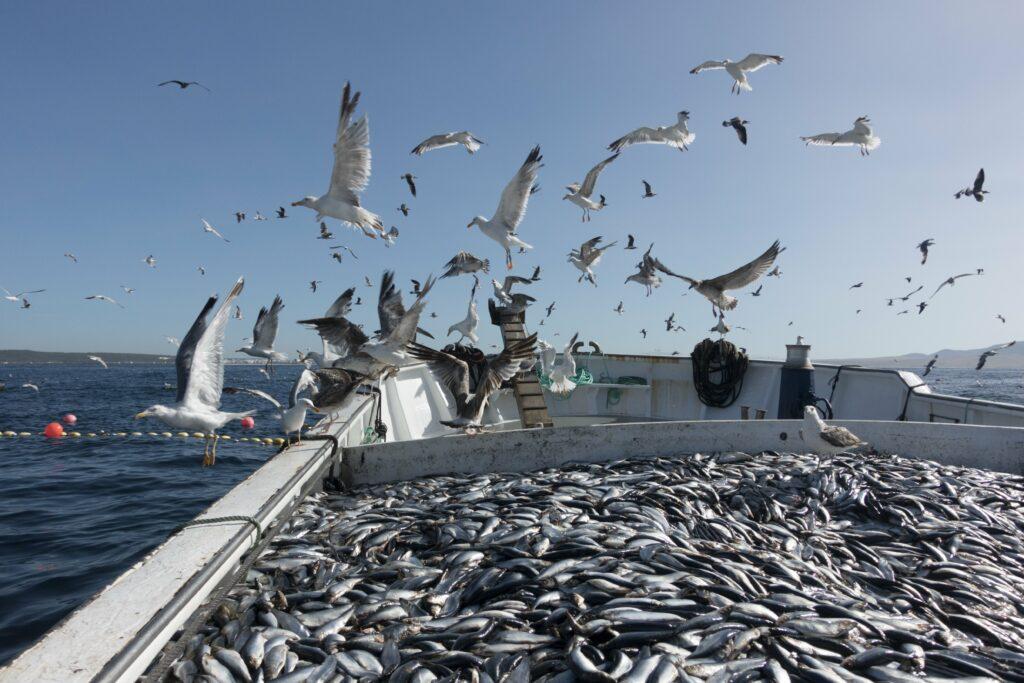 tonijnvisserij in Spanje
