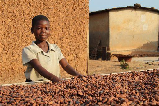 L'industrie du chocolat n'a jamais autant fait travailler les enfants: 'Une hypocrisie ahurissante'