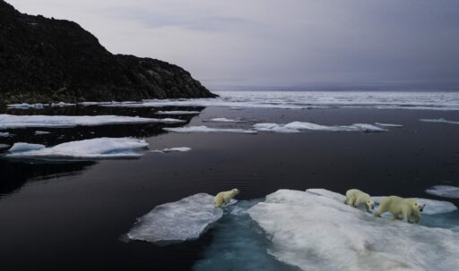 Le berceau des glaces de l'Arctique n'est toujours pas gelé, une inquiétante première