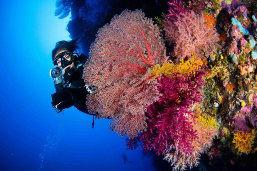 Great Barrier Reef heeft een nieuw 'broertje' van 500 meter hoog