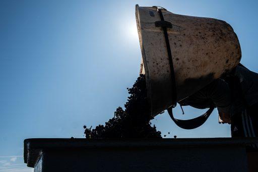 Het druivenschaakbord anno 2020: de Franse wijnoogst in kaart gebracht