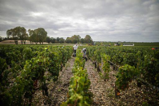 Bordeaux-wijnen dreigen te verschralen door jacht op rendement