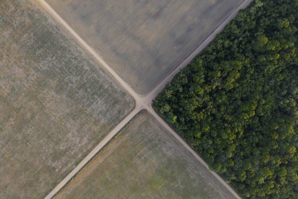 Regenwoud Amazone Brazilië