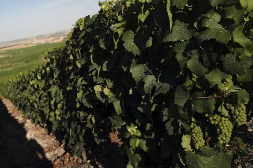 Champagne ontsnapt aan chaos: uiteindelijk toch akkoord tussen champagnehuizen en druiventelers