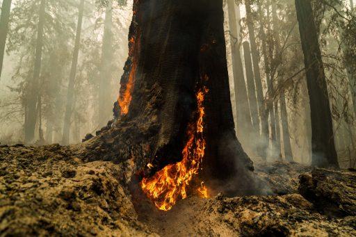 La Californie va utiliser un drone pour repeupler ses forêts détruites par les incendies