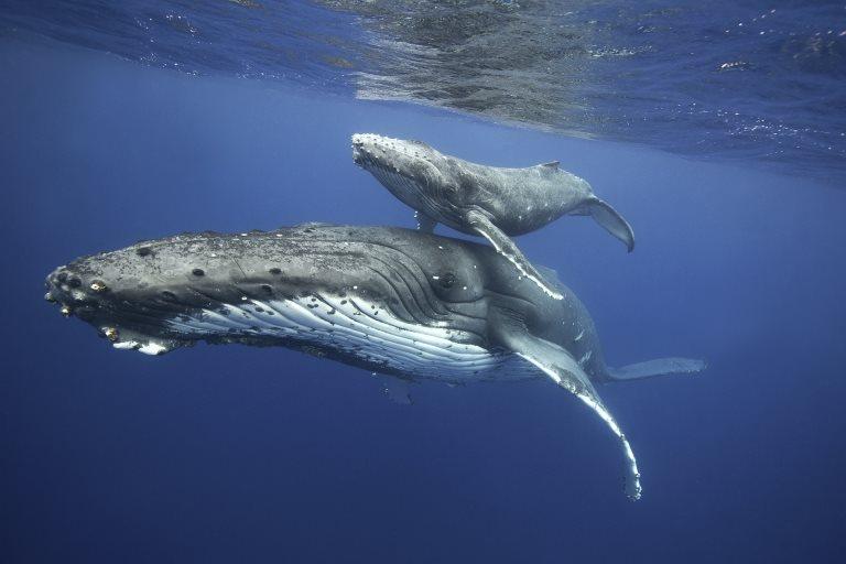 Hoe NASA-technologie 's werelds grootste haai van uitsterving redt - Business AM - NL