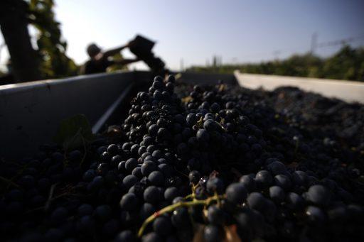 'Een oenologische harakiri': miljoenen liters Italiaanse wijnoverschotten worden handgel