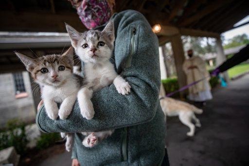 Moeten we binnenkort ook onze huisdieren vaccineren? Wetenschappers zeggen van wel