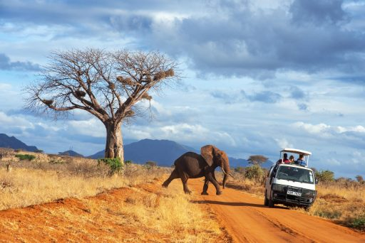 Komt toerisme in Afrika mokerslag door pandemie nog ooit te boven?