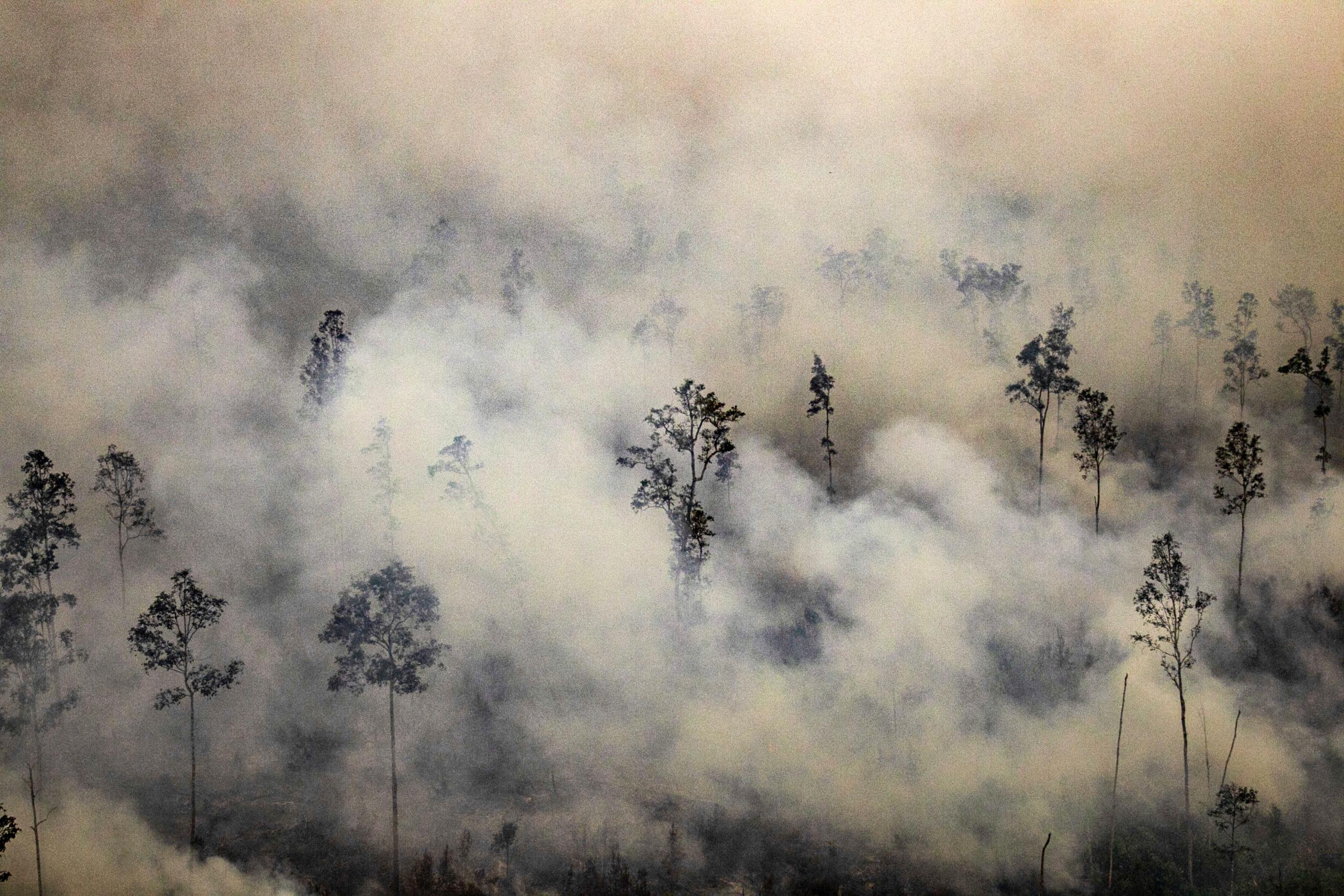 Les feux de forêt en Indonésie ont recouvert certaines parties de l'Asie du Sud-Est d'épais nuages de cendres et de fumée.