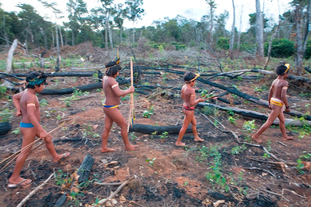 Wereldwijde ontbossing sterk toegenomen tijdens de pandemie