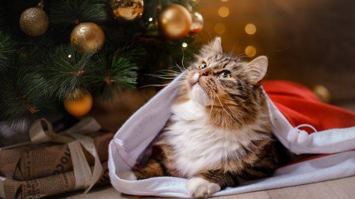 Kat Kerstmis