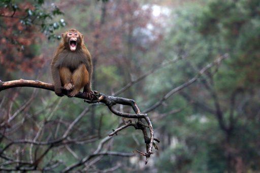 Britse supermarkten boycotten Thaise 'makaakkokosnoten'