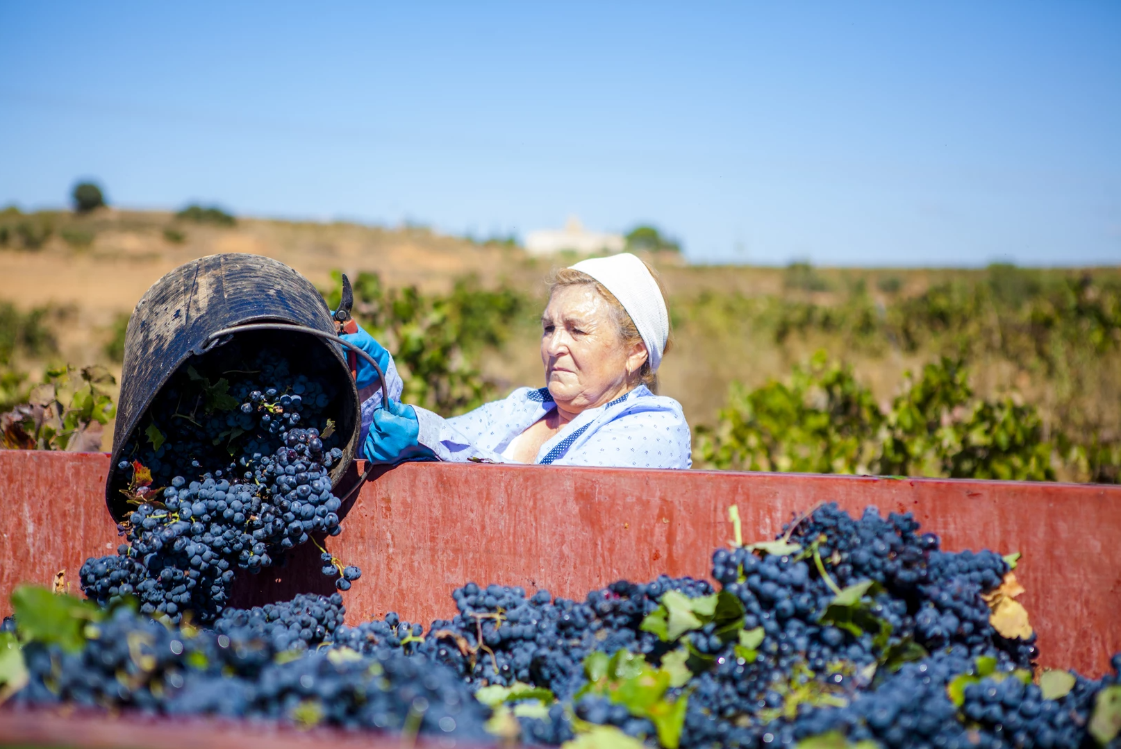 Utiel-Requena wijn
