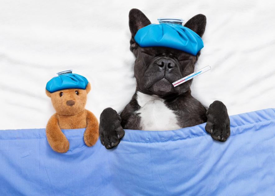 Hoe merk je dat je huisdier ziek is?