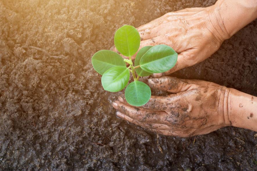 Wat is de beste periode om te tuinieren?