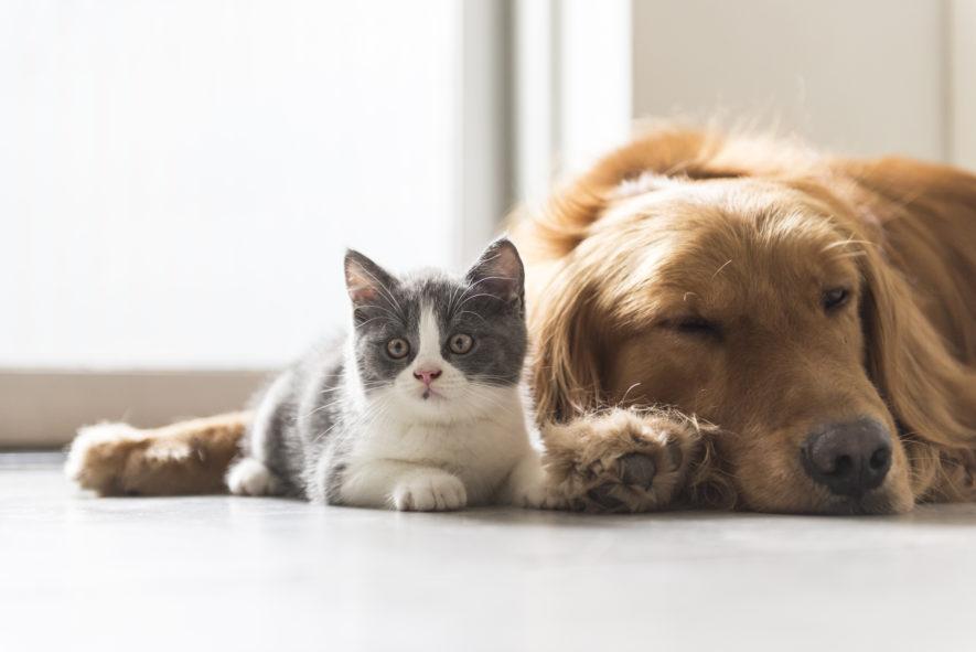 Hoe weet je of je allergisch bent aan je huisdier?