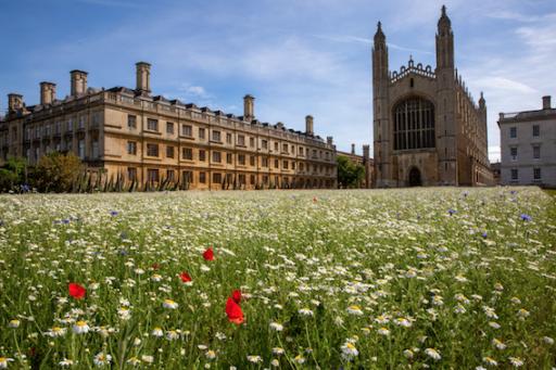 Les universités menacées par la crise: 13 institutions britanniques pourraient faire faillite