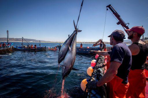 Europese Rekenkamer: 'Biodiversiteit Middellandse Zee wordt onvoldoende beschermd'