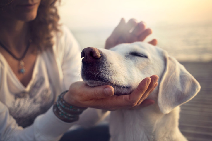 Bewezen: honden houden er niet van als je hen knuffelt