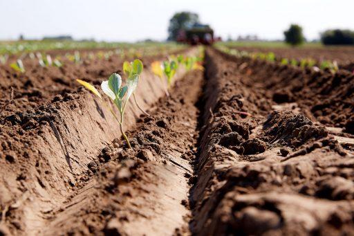 Landbouwplannen Colruyt stuiten op weerstand bij boeren: 'Decennia terug in de tijd gekatapulteerd'