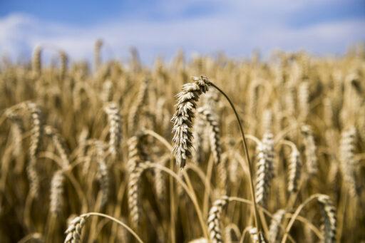 Entre 2015 et 2019, le prix moyen des terres agricoles a augmenté de 41,8% en Wallonie