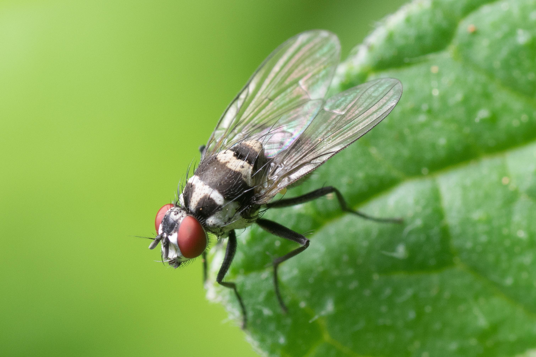 7 ingrédients naturels pour chasser les mouches