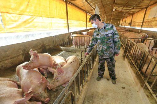 Onrust over nieuwe variant van varkensgriep in China