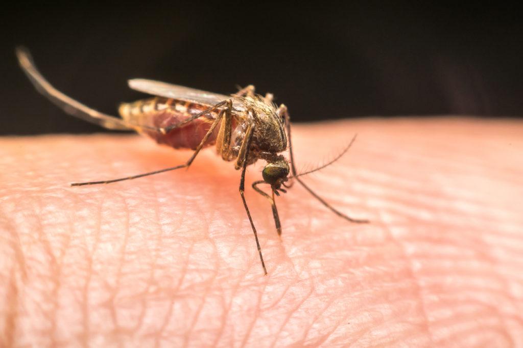 Daarom wen je maar beter aan muggen in de winter