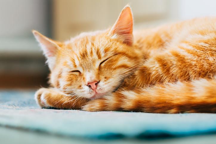 Deze 3 gewoontes van een kat zijn ook goed voor mensen