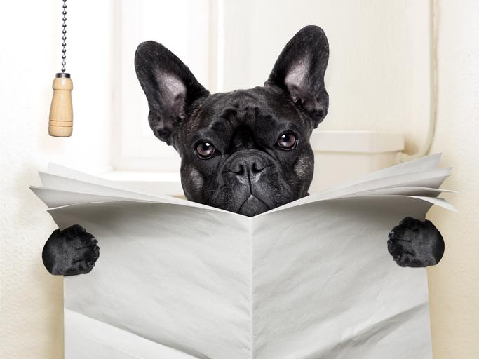Dit is waarom een hond jou aankijkt tijdens de grote boodschap
