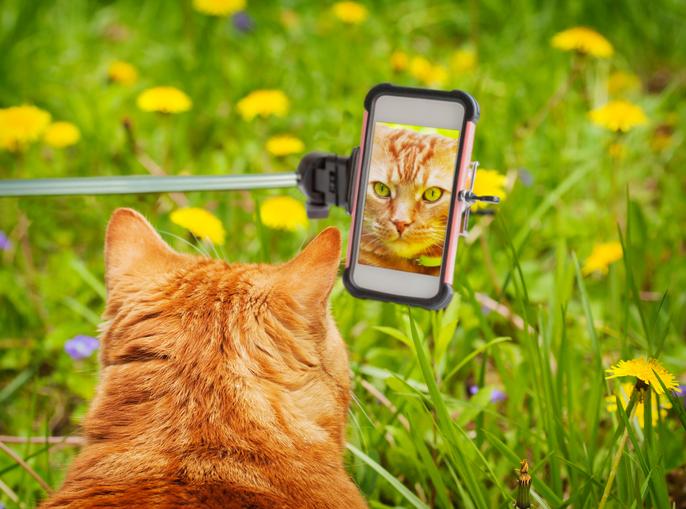 Dit zijn de leukste katten-apps!
