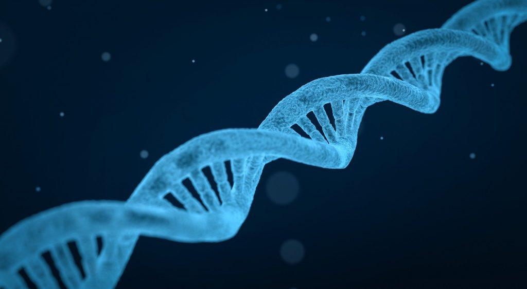 brin ADN