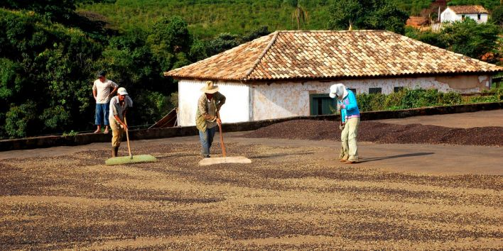 coffee brazil agriculture