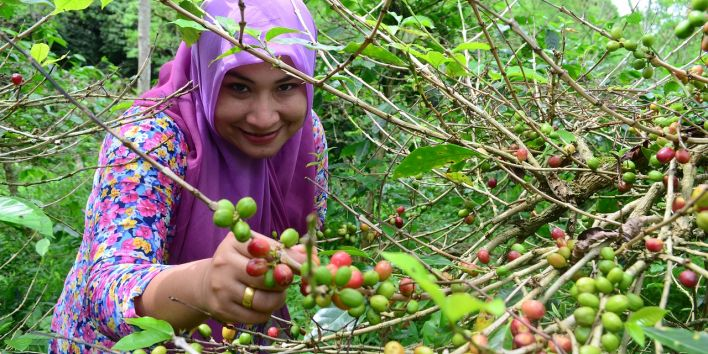 coffe plant agriculture