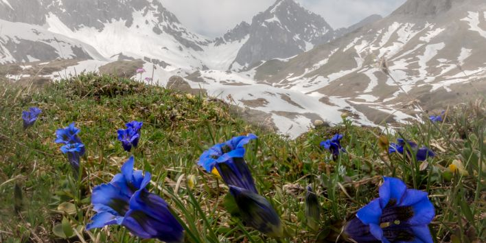 Lech Austria nature mountain hike flower