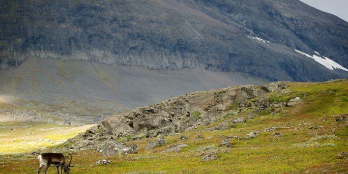 Kungleden Sweden hike nature deer